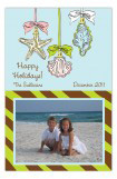 Ornamental Seashells Photo Card