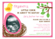 Little Chick Girl Baby Shower Photo Invitation